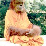 Adormirea maselor prin spiritualitate | Industria trufiei